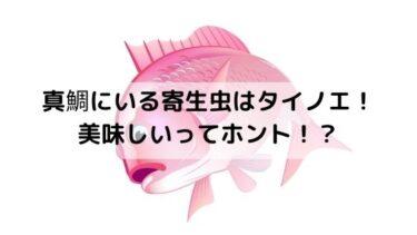 真鯛にいる寄生虫は食べれる?