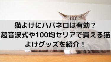 猫よけグッズは100円で買える!100均セリアやダイソーを調査!ハバネロも有効!?